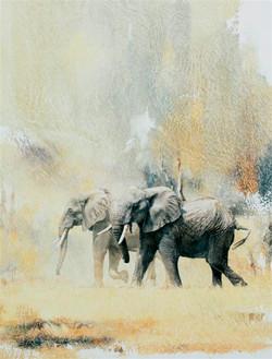 Elephants and Dust - GH011