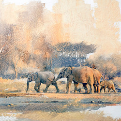 Elephant Herd GH002