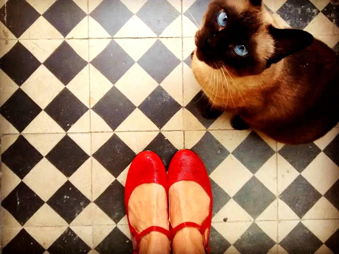 red flats & cat