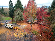 arial view of large tree next to parkinglot being removed by a tree climber in the Autumn