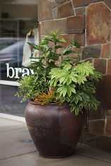 a large container in an outdoor shopping center filled with shade tolerant evergreen plants including heather and aralia