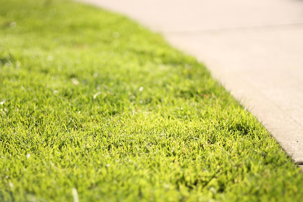 a sunny patch of green lawn next to a sidewalk