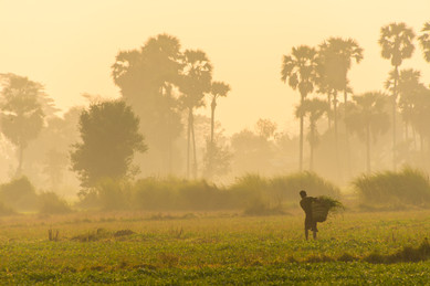 Sunrise on the Rice Fields - Thaton, Myanmar