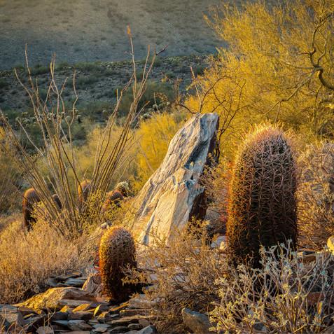 Cactus & Rock - Lost Dog Wash