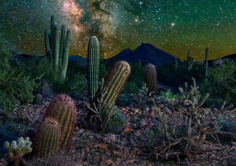 The Sonoran Desert at NIght