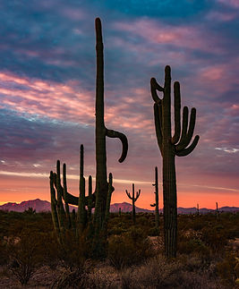 Saguaro cactus are silhouetted by red sunrise clouds with the mountains of Mexico behind - travel photography - Organ Pipe Cactus National Monument.jpg