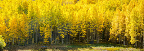 Fall Spectacular Panorama - Vail, Colorado