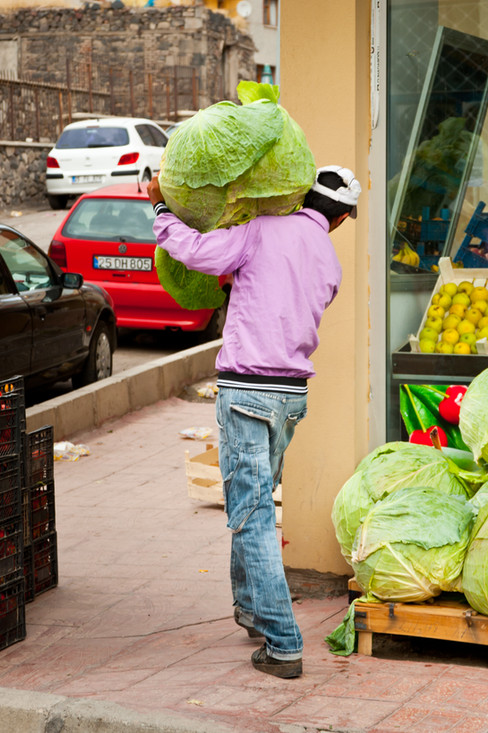 I Couldn't Even Imagine a Cabbage This Big Before Seeing This! - Erzurum, Turkey