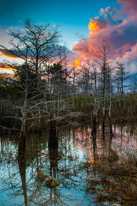 Dusk at Big Cypress - Big Cypress National Preserve, Florida