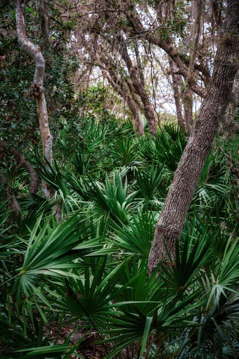 Hardwood Hammock - Florida