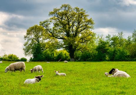 Near Kells - County Meath