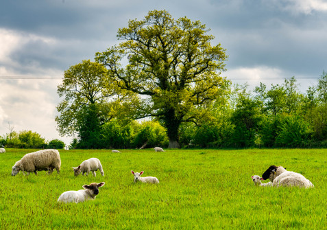 Near Kells - County Meath