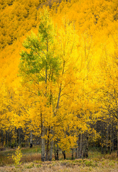 One More to Go - Fall Color - Vail, Colorado
