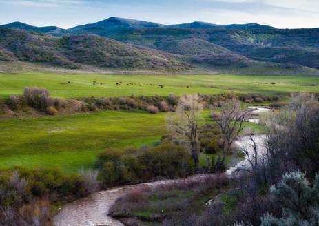 Buzzard Creek in Spring - Western Colorado