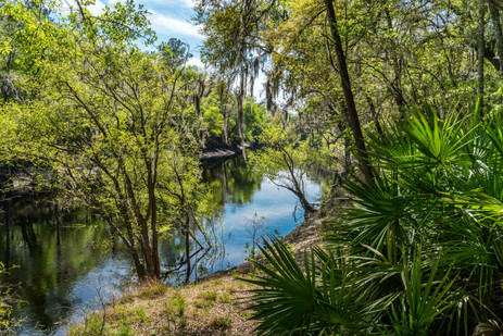 Way Down Upon the Suwannee River - White Springs, Florida