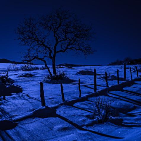 New Snow Beneath a Full Moon - Western Colorado