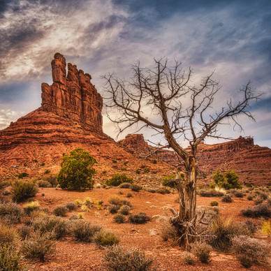 The Southern Utah Desert in Winter - Utah