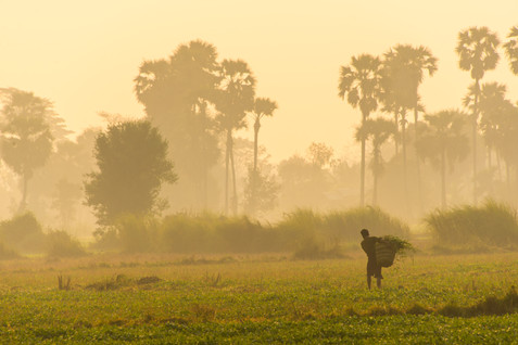 Heading to the Fields at Sunrise - Toungoo
