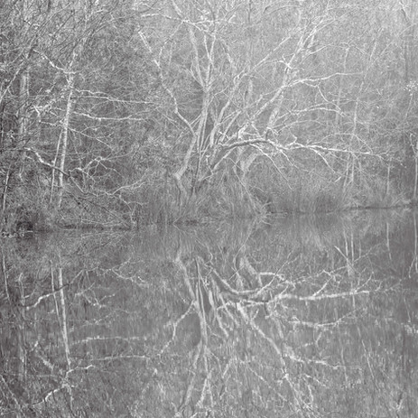 Foggy Morning - Tickfaw Satate Park, Louisiana