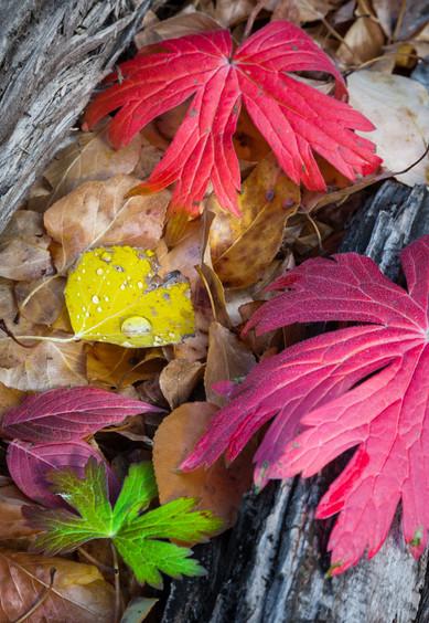The Many Colors of a Colorado Autumn - Fulford, Colorado