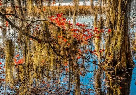 A Taste of Fall Color - Ocean Pond, Florida