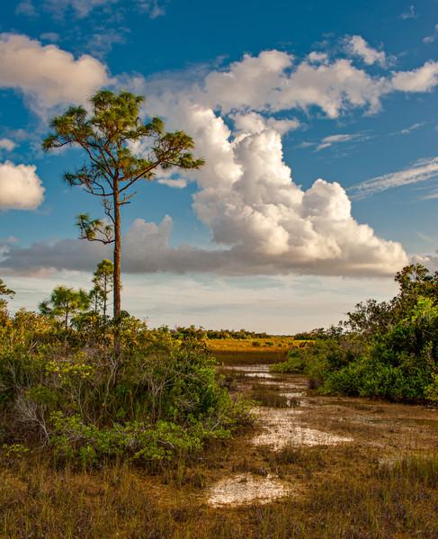 Pine Hammock and Clouds - Everglades National Park, Florida