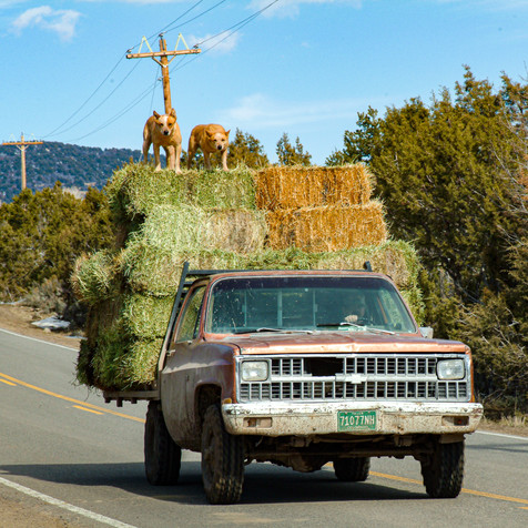 Bringing in the Hay - Western, Colorado