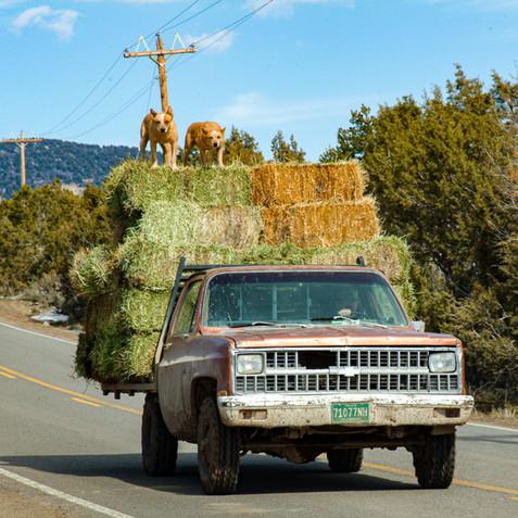 Bringing in the Hay - Western, Colorado
