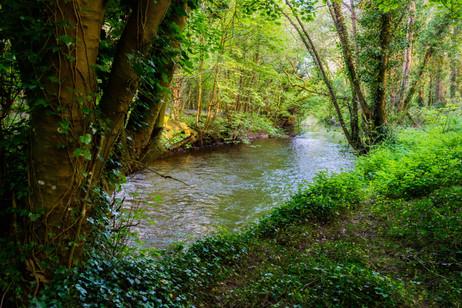 Along the River Nore Near Durrow- County Kilkenny