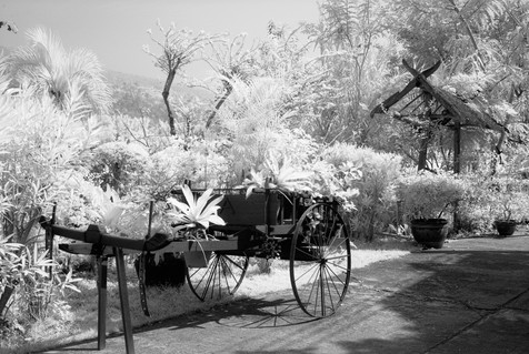 Old Cart and Foliage - Thaton