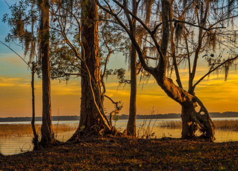 Sunset Along Ocean Pond - Ocean Pond, Florida