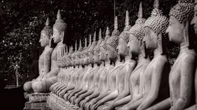 Many Buddhas - Ayutthya