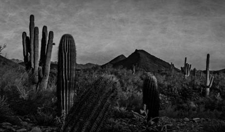 Lost Dog Wash Pano - Arizona