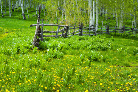 Old Corral in Spring - Grand Mesa National Forest - Colorado