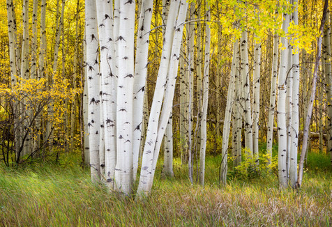 Aspen Trunks - Vail, Colorado