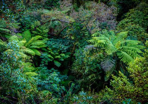 Arahura Gorge - West Coast