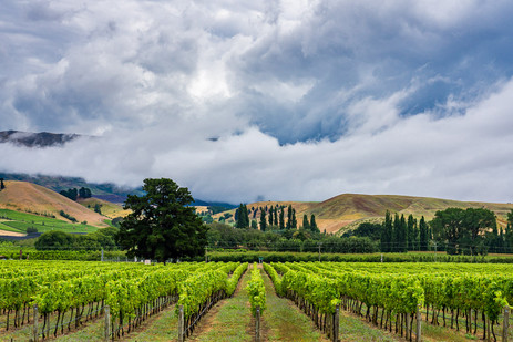 Wine Country - Cromwell