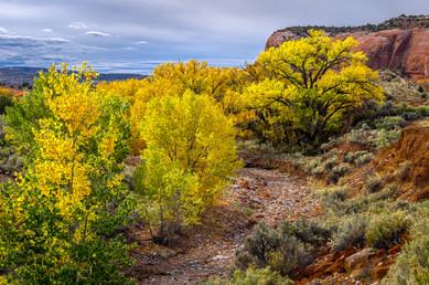Fall Color South of Moab -Utah