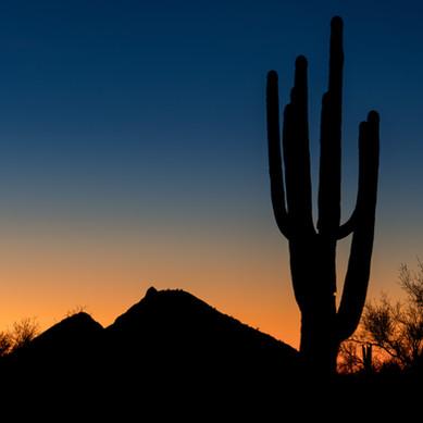 Pre-dawn Saguaro - Lost Dog Wash