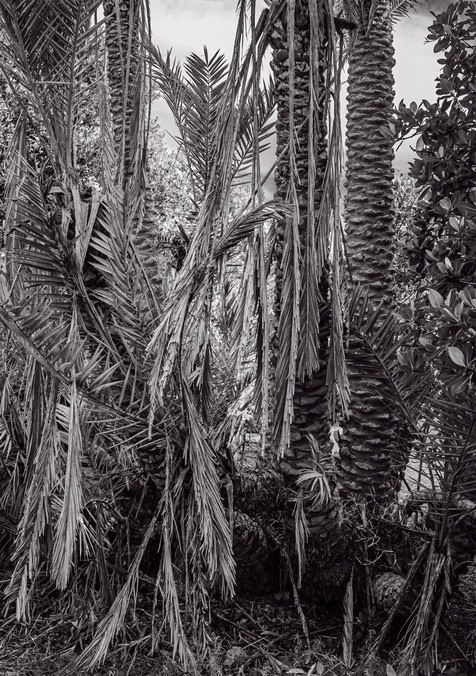 Sable Palms - Florida