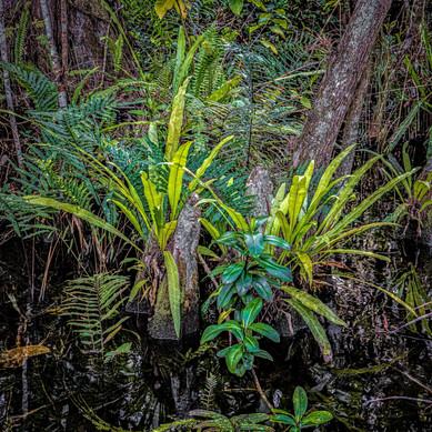Big Cypress National Preserve, Florida