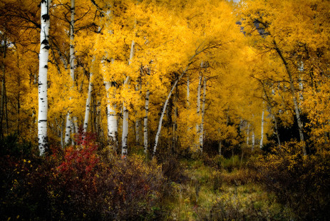 Fall Colors Along Buck Creek - Avon, Colorado