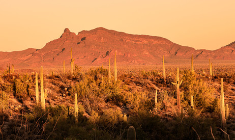 Organ Pipe Sunset on the Ajo Mountains