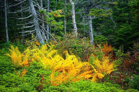 Fall Foliage Along the East Coast Trail - Near Torbay, Newfoundland