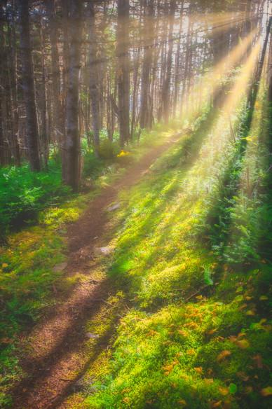 Sunrays Along the East Coast Trail - Near Torbay, Newfoundland