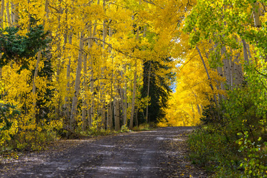 Forest Road in Autumn - Grand Mesa National Forest, Colorado