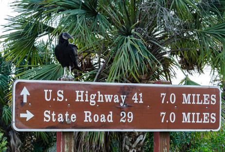 Along the Tamiami Trail - Big Cypress National Preserve, Florida