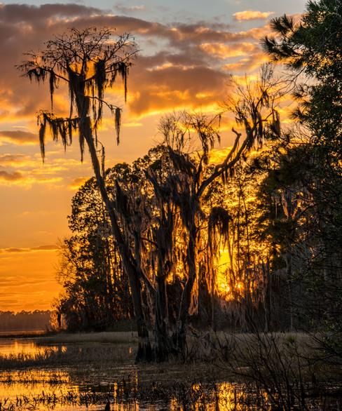 Sunset and Cypress - Ocean Pond, Florida