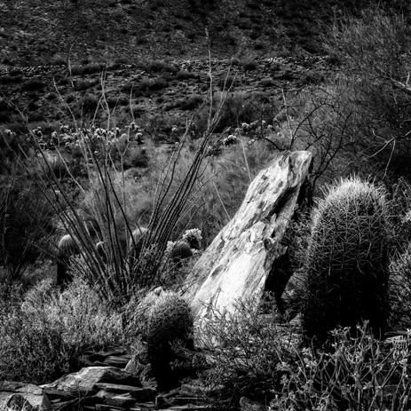 Rocks, Ocotillo and Cactus, Lost Dog Wash, Arizona