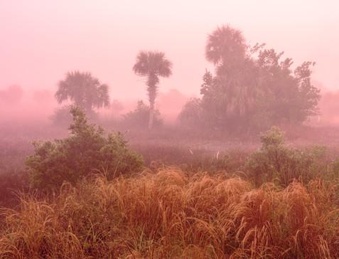 Foggy Sunrise in the Big Cypress Swamp - Big Cypress National Preserve, Florida